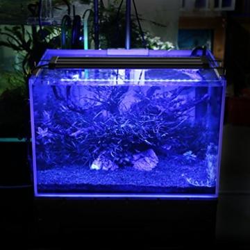 BELLALICHT Aquarium LED Beleuchtung, Aquariumbeleuchtung Lampe Weiß Blau Licht 6W mit Verstellbarer Halterung für 30cm-45cm Aquarium - 6