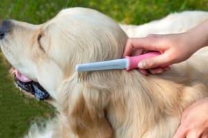 Hundebürste mit gummiertem Griff
