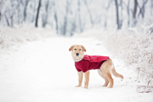 Hund im Schnee mit Hundemantel