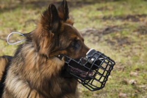 Dog with a muzzle