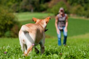 Hund zurückrufen mit Hundepfeife