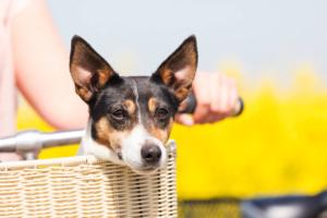 Fahrradkorb für Hunde