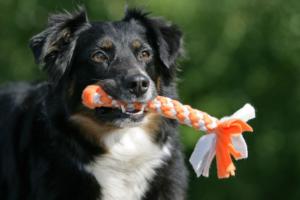 Spielzeug für Hunde