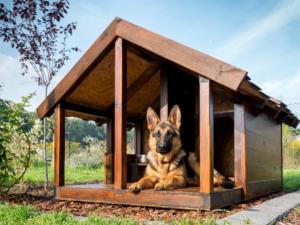 Hund mit Hundehütte