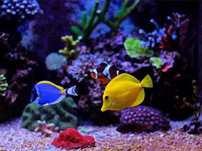 Aquarium Heizung