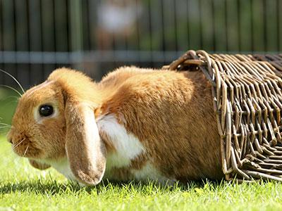 Kaninchen Spiele
