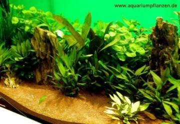 Mühlan - über 120 Aquarium-Pflanzen in 16 Bunde - großes farbiges Sortiment für 200 Liter Aquarium - 1