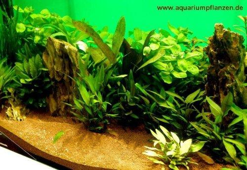 Der Grosse Aquarienpflanzen Test Unsere Top 5 Aquarienpflanzen