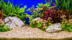 Rote Aquarienpflanzen dienen als Eyecatcher