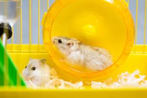 Hamsterlaufrad