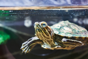 Gesunde Schildkröte
