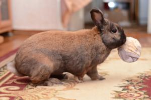 Kaninchen mit Ball