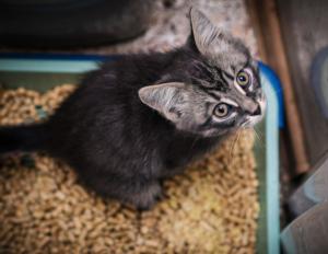 Katzenklo mit ausreichend Platz