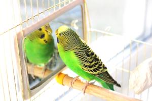 Spiegel für Vögel