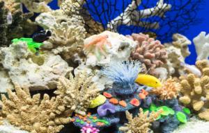 Das Aquarium mit schöner Deko aufwerten
