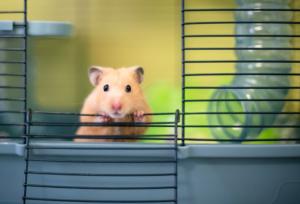Artgerechter Hamsterkäfig