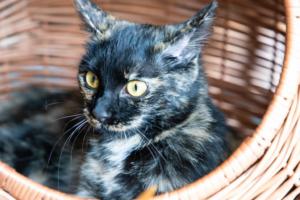 Katzentransportbox aus Weide