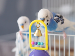 Glöckchen für Vögel