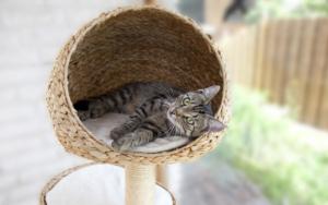 Katze im Kratzbaum