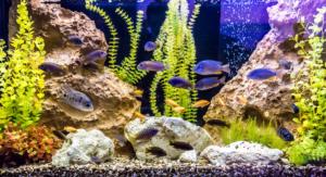 Natürliche Aquarium Deko