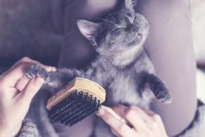 Katze genießt das Bürsten