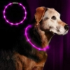LED Leuchthalsband Hunde Halsband - Anicoll USB wiederaufladbar - Längenverstellbarer Haustier Sicherheit Kragen für Hunde und Katzen- 3 Modus 12 Lichte (Lila) - 1