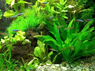 30 Aquarienpflanzen & 1000 ml Flockenfutter Hauptfutter, Wasserpflanzen - 1