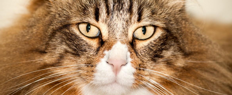 Regelmäßige Kosten für Katzen