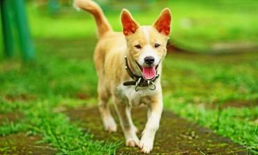 Anschaffungskosten beim Hund
