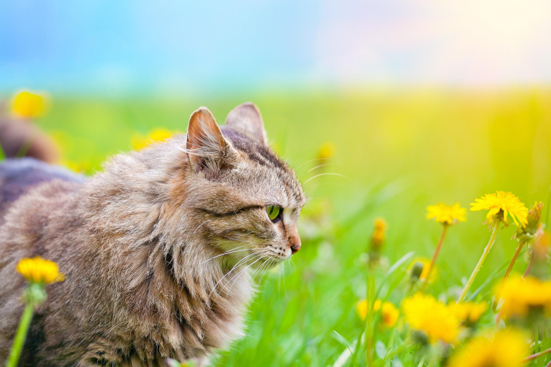 Ungiftige Pflanzen für Katzen im Zimmer, Balkon und