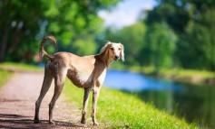 Voraussetzungen Hundehaltung