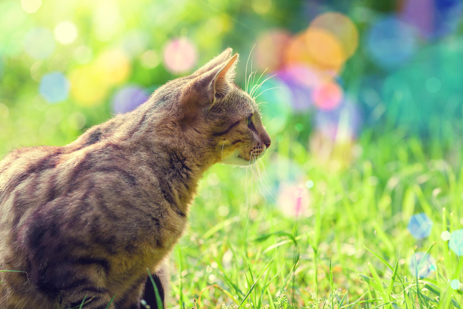 Anschaffungskosten einer Katze