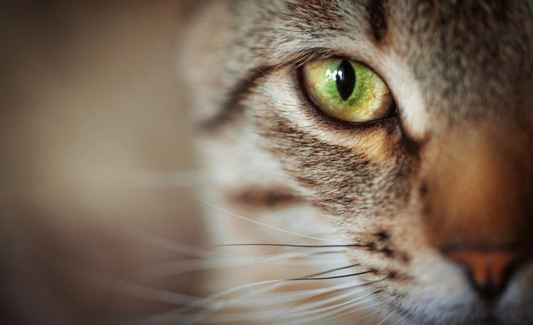 Katzennamen: So finden Sie den richtigen!