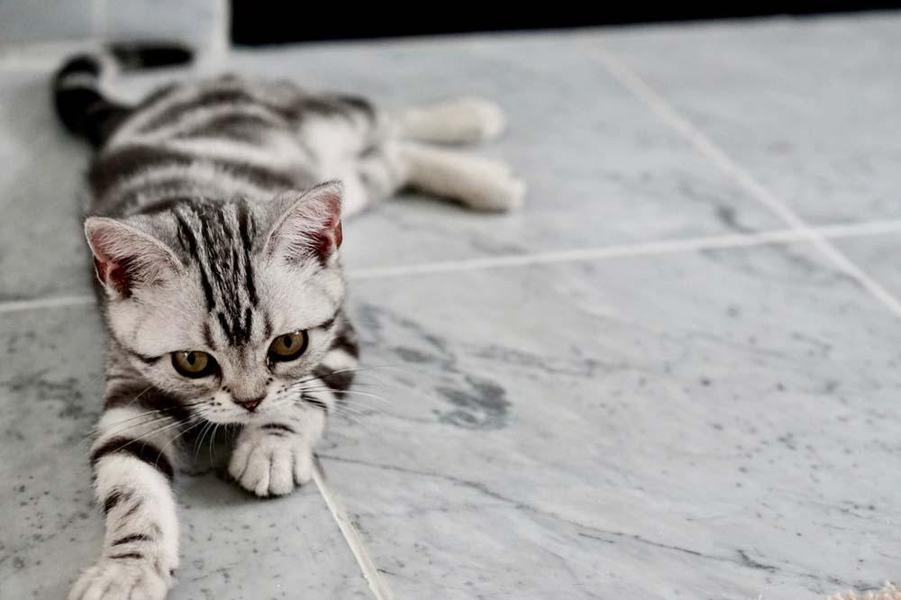 Anschaffung einer Katze