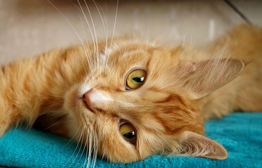 Voraussetzungen für die Katzenhaltung