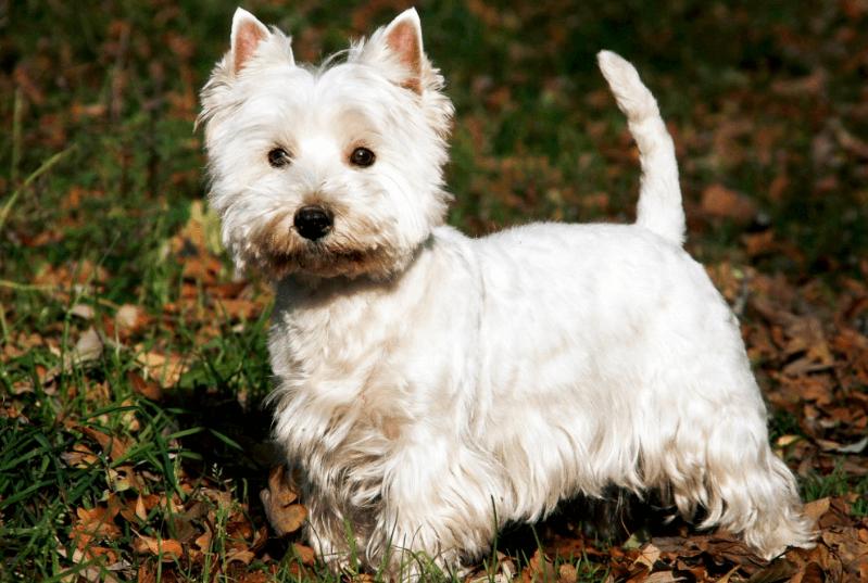 Das Hunde Quiz