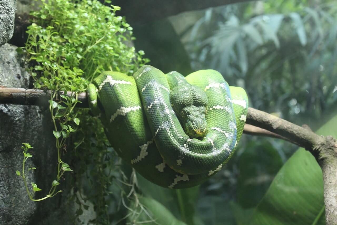 Zeitaufwand für Reptilien