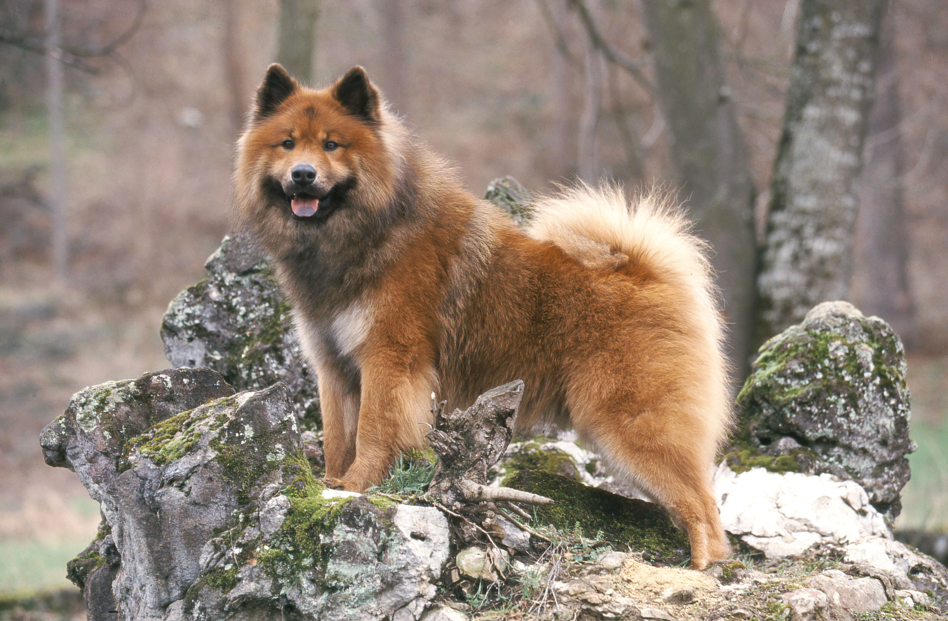 Cute Dog Breeds Com