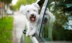 Dog on the Road - Mit Auto und Hund in den Urlaub