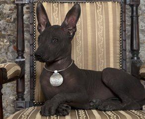 5 außergewöhnliche Hunderassen - Kennen Sie die schon?