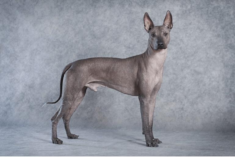 5 außergewöhnliche Hunderassen – Kennen Sie die schon?