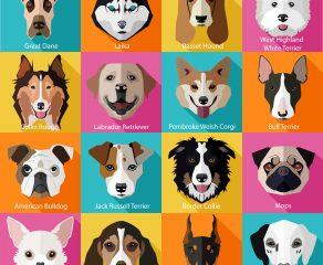 Die 20 beliebtesten Hunderassen