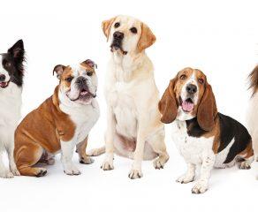 Hunderassen - Eine nicht ganz ernst gemeinte Charakterstudie