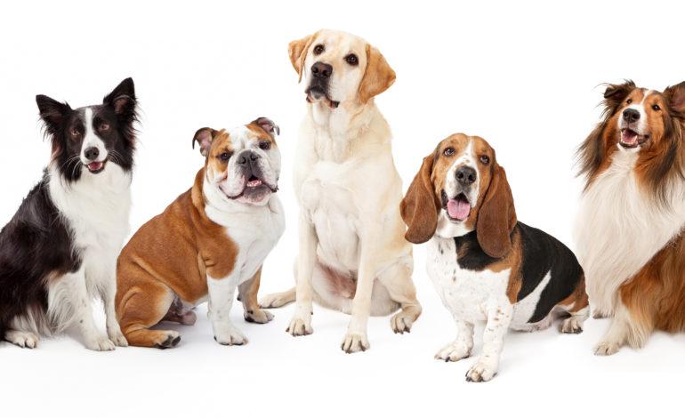 Hunderassen – Eine nicht ganz ernst gemeinte Charakterstudie