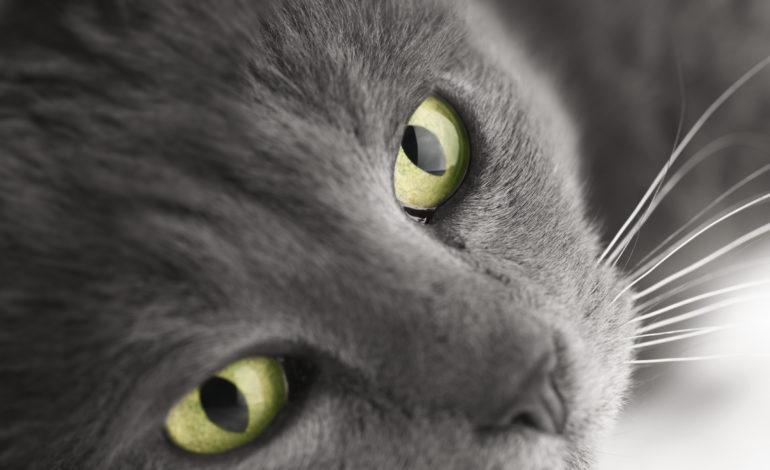 15 erstaunliche Fakten über Katzen