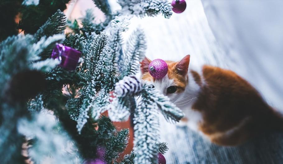 Weihnachten mit einer Katze