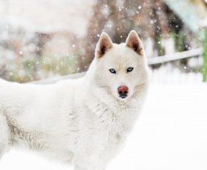 So kommen Hunde gut durch den Winter