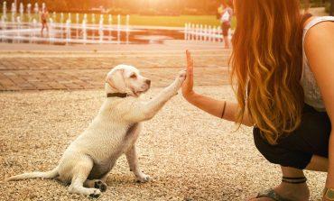 Sitz! Platz! Aus! – Tipps zur richtigen Hundeerziehung