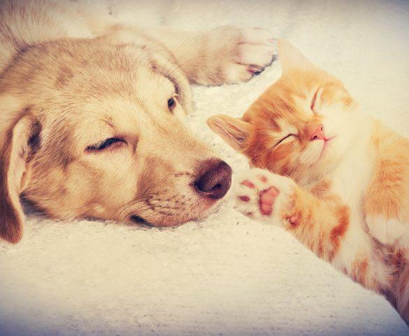 Hund und Katze: So klappt das Zusammenleben