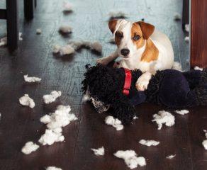 Achtung: Haushaltsgefahren für unsere Haustiere